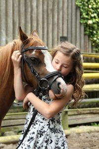 Hästar och träning!